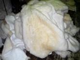 Fehér birkabőrök